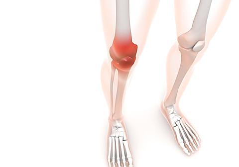 関節、筋肉